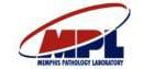 Memphis pathology labs labs image Partners   Laboratories